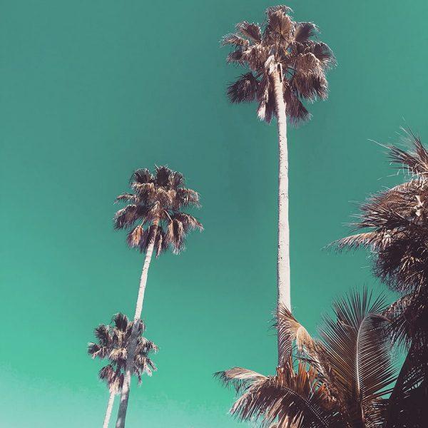 Paradise / Anna Maria Island
