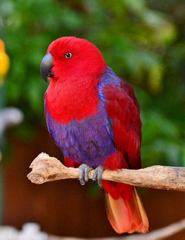 Red and Purple / Sarasota fine art print