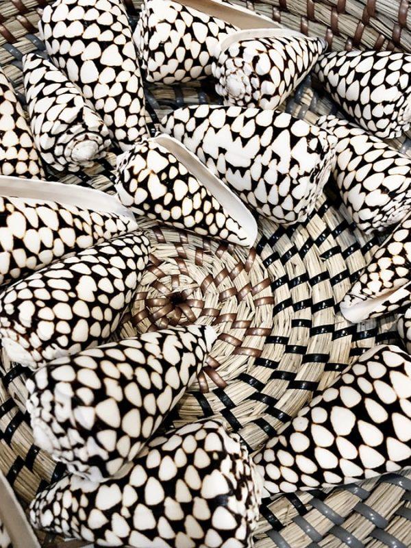 Black and White shells